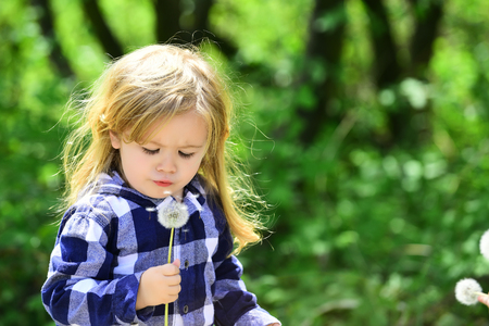 Freedom, activity, discovery. Child blow dandelion in spring or summer park. Childhood, future, growth concept. Kid with long blond hair in plaid shirt outdoor. Boy with flower on idyllic sunny day.