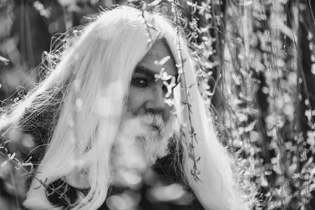 長い灰色の髪と黄色の花で真剣な顔にひげを持つドルイド老人は、自然の背景に屋外で晴れた日を咲かせます