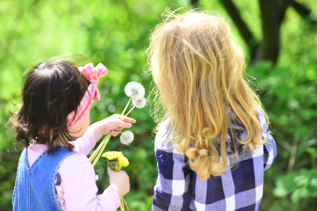 Children pick dandelion flowers in spring or summer park on idyllic sunny day outdoor. Childhood, family, love concept.