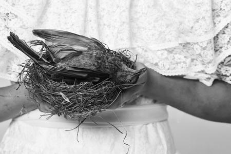 スタジオで女性の手でわらや木製の巣に横たわっている翼にふわふわの羽を持つ小さな茶色の鳥