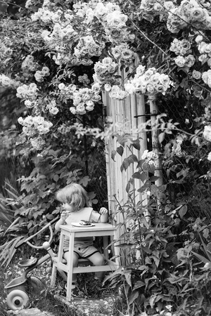 Small boy child with long blonde hair sitting at wooden table eating pie near plastic toy outdoor with bush of rose flowers pink color with green leaves