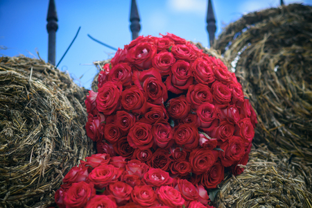Bunches of red roses and hay bales on blue sky. Flowers and haystack, package. Harvest, autumn, summer season concept. Holiday celebration, decoration, decor, design.