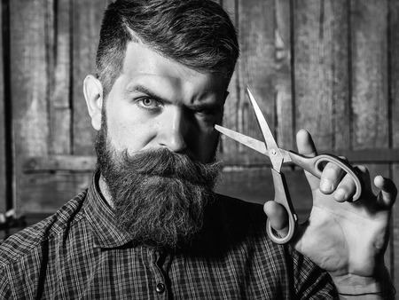 Bearded man hipster barber with beard and moustache in shirt holds sharp scissors and cut hair in hairdresser salon on wooden background