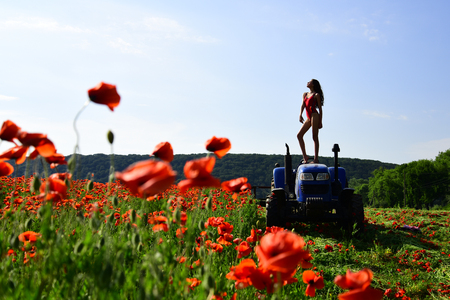 woman work in poppy field on tractor. rich harvest, spring season, industrial transport. narcotics and drug. farming, new technology, agriculture, summer. agronomist woman on tractor, poppy flower. Stock Photo