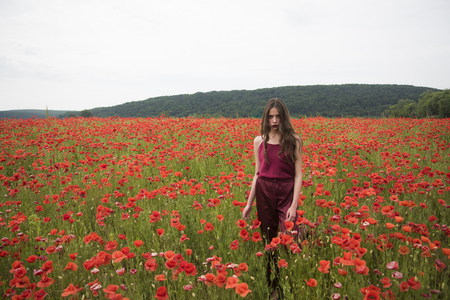 Poppy, Remembrance day, Anzac Day. Drug and love intoxication, opium, medicinal. Woman in poppy flower field, harvest. Opium poppy, botanical plant, ecology, woman. Beauty, summer, spring, poppy seed. Stock Photo