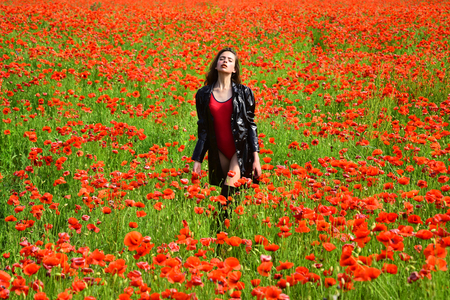 Opium poppy, botanical plant, ecology, woman. opium flower of red poppy