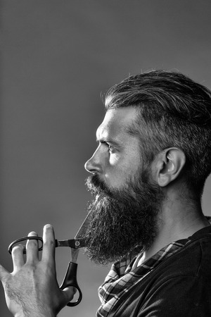 young handsome bearded man with long beard moustache and brunette hair holding hairdresser or barber scissors with emotional face in studio on grey background Stock Photo