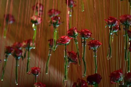 빨간 장미 꽃과 유리 시험관 갈색 배경, 유사성의 개념 만요