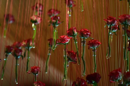 Glass test tubes with red rose flowers hang on brown background, concept of similarity 版權商用圖片