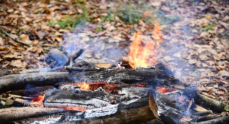 Bonfire or fire in the forest, picnic, barbecue. Picnic concept. Autumn land with fallen orange and yellow leaves.