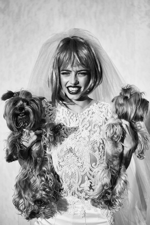 young pretty woman with orange or pink hair and bright makeup on emotional face in white wedding dress and blue bride veil with two dog pets of Yorkshire Terrier breed