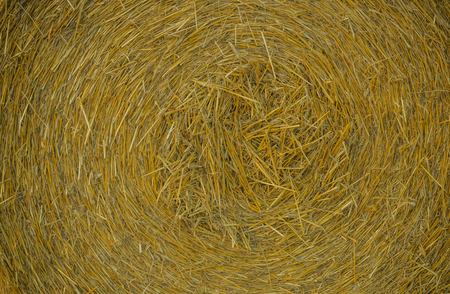Hay background as front view of bale. Agriculture, farm and farming symbol of harvest time with dried grass straw.