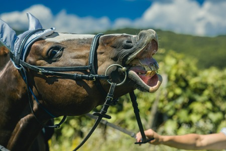 Horse wear muzzle on natural background, farming. Equine in muzzle on pasture on sunny summer day. Grazing, horse breeding, ranch, farm, farming. Stok Fotoğraf