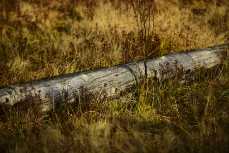 Old tree without bark lies. Nature concept. Log lies in dry grass and is illuminated by sun, autumn landscape.