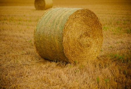 Agriculture, farming, ecology. Agriculture, harvest, crop, harvesting.