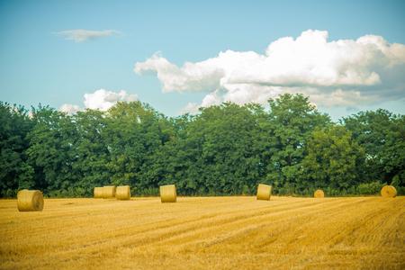 Haylages는 잘라 잔디, 사료에 굴러. 필드, 농업에 건초 bales 건조. 사료, 사료, 건초 만들기. 농업, 농업, 생태. 수확, 작물, 수확.