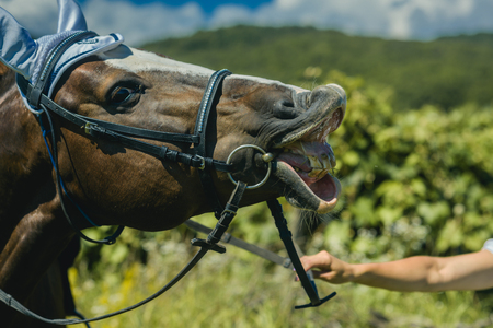 Equine in muzzle on pasture on sunny summer day. Horse wear muzzle on natural background. Grazing, horse breeding, ranch, farm, farming.
