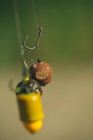 Hooks device for fishing, angling, catching fish, carp fishing. Hooks on line on blurred background.