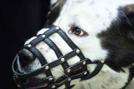 개는 가죽 총구를 착용하십시오. 애완 동물, 가축. 보호, 안전, 제한 개념. 스톡 콘텐츠