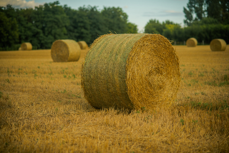 Perfect harvest landscape with straw bales on fields.
