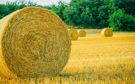 Straw bales in harvested field during summer