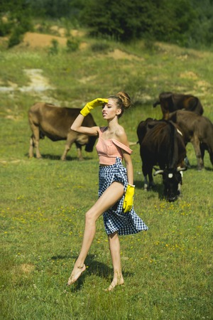 Vet in yellow gloves with cattle whilst they are eating
