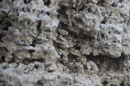 Beautiful rock texture, stone with holes. Grey petrified coral reefs. Coastal rocks concept. Natural texture, rocky background. Geology, archeology, palaeontology.