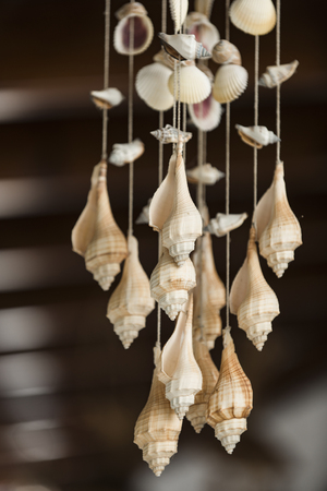 Decoration for interior, decoration made out of sea conches, natural beauty. Decoration craft with seashells hanging under ceiling, dark background. Beautiful seashells as decor. Decor and sea concept
