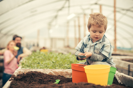 Busy kid filling orange, green and yellow pots with soil. Cute blond boy playing in greenhouse while his parents stand further away. Фото со стока