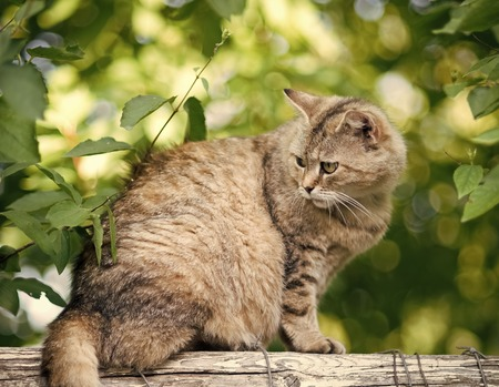 Adorable cat with furry coat sit on fence on summer nature background. Feline, domestic animal, mammal. Pet, companion, friend.