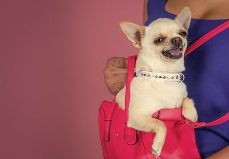Pet, companion, friend, friendship Banco de Imagens - 101187429