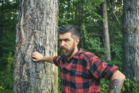 Summer vacation concept. Bearded man in forest. Hipster with long beard on natural green landscape. Tourist in plaid shirt relax at tree. Traveler hiking on sunny day. Stock Photo