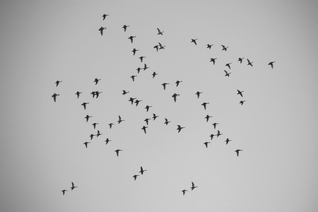 Many birds in sky