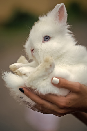 Cute white rabbit in hands Stock fotó