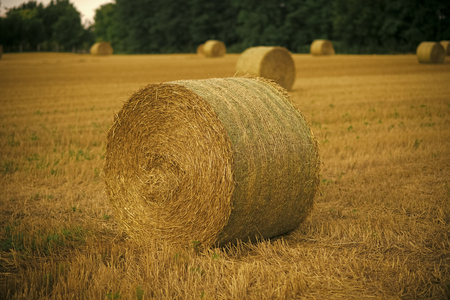 Hay bale dry on field, agriculture