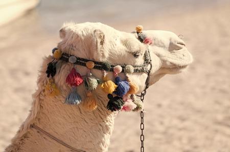 Desert transport, travelling, travel Stockfoto