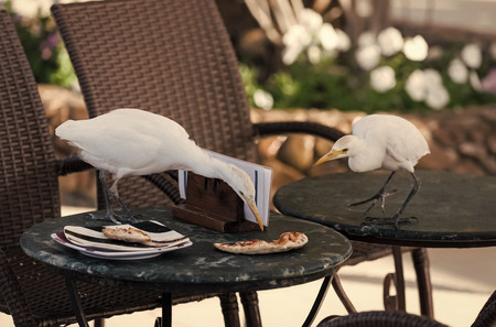 Birds eat pizza scraps from table in outdoor cafe