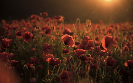 Remembrance day, Anzac Day, serenity.