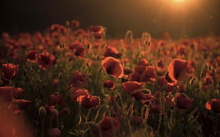 纪念日,澳新军团日,宁静。