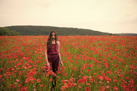 Poppy, Remembrance day, Anzac Day. Drug and love intoxication, opium, medicinal. Stock Photo