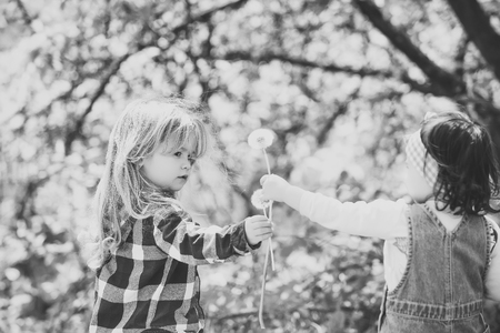 Kids playing - happy game. Boy give dandelion flower for girl