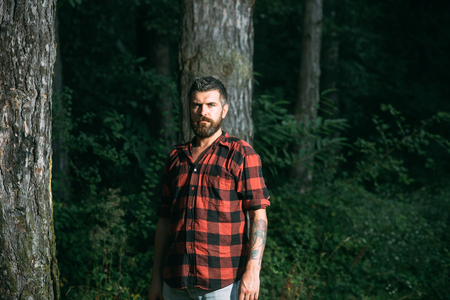 Brutal bearded man standing in front of trees. Concentrated lumberjack wandering in wilderness in the evening. Фото со стока