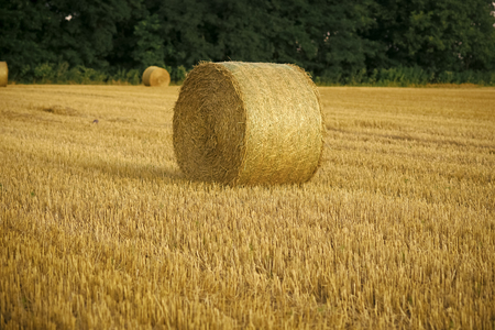 Harvest crop harvesting Haylage rolled on cut grass fodder Hay bale dry on field, agriculture