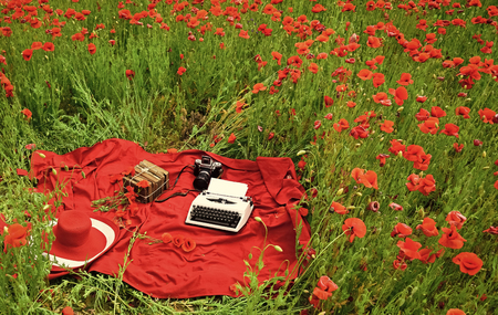 a typewriter on the beautiful poppy flower field 스톡 콘텐츠