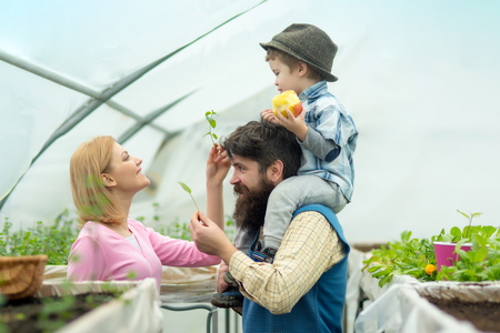 Greenhouse Hydroponic system. Green house structure factory, Manufacture and Build. Glasshouse Restaurant, Glasshouse Megastore. Happy Family in Garden Greenhouses. Garden Greenhouse Kits. Stock Photo