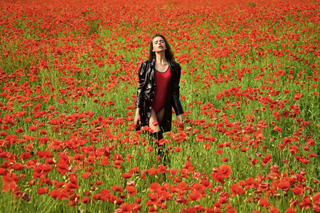field with poppies. Opium poppy, botanical plant, ecology, woman. Zdjęcie Seryjne