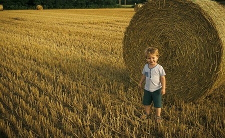 eco tourism. Cute little kid boy in wheat field