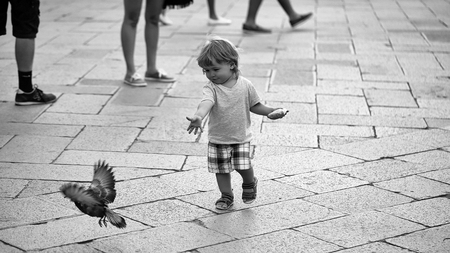 child runs after the pigeon. Baby boy feeding pigeon Banco de Imagens