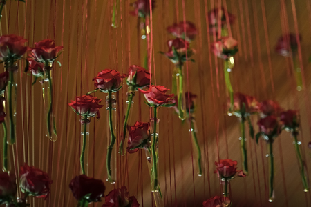 decor with roses. Glass test tubes with red rose flowers hang