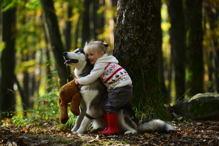 Girl in park with dog husky. Girl with siberian husky. Delightful girl plays with siberian husky. Girl walking with hunting dog